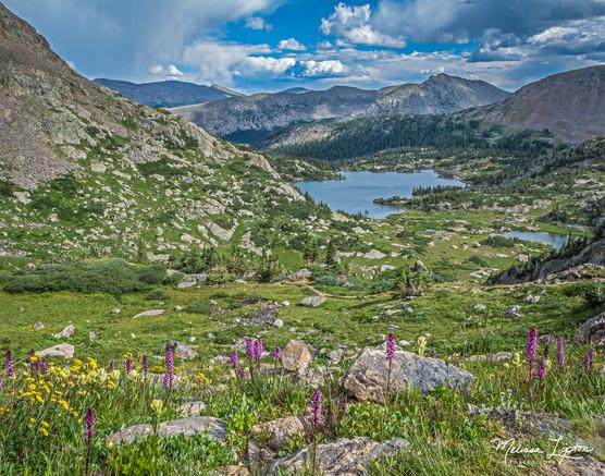 Alpine Lake in Bloom