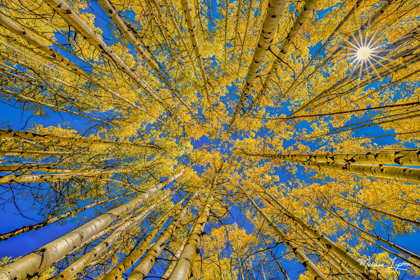 Aspens Upward