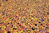 Sea of Leaves  - Melissa Lipton Photogra