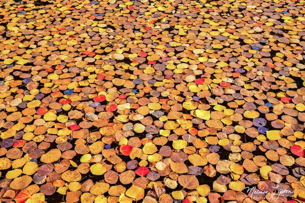 Sea of Leaves