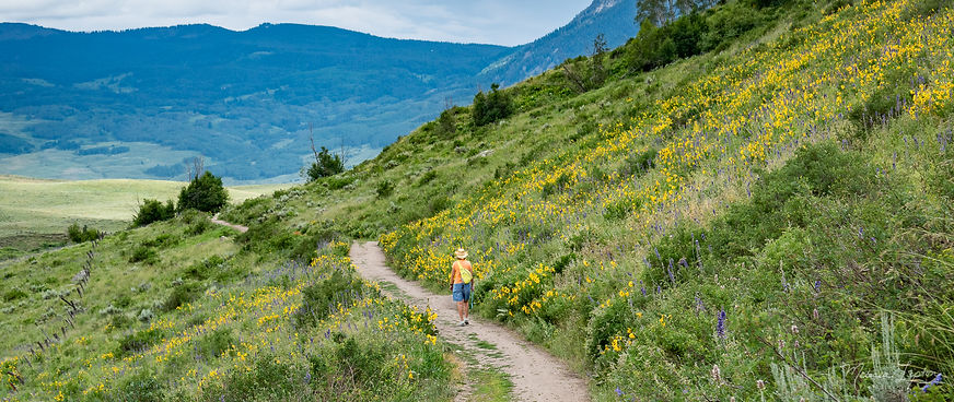crested butte creek path with flowers -