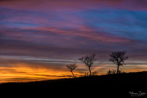 Tree Trio Silhouette