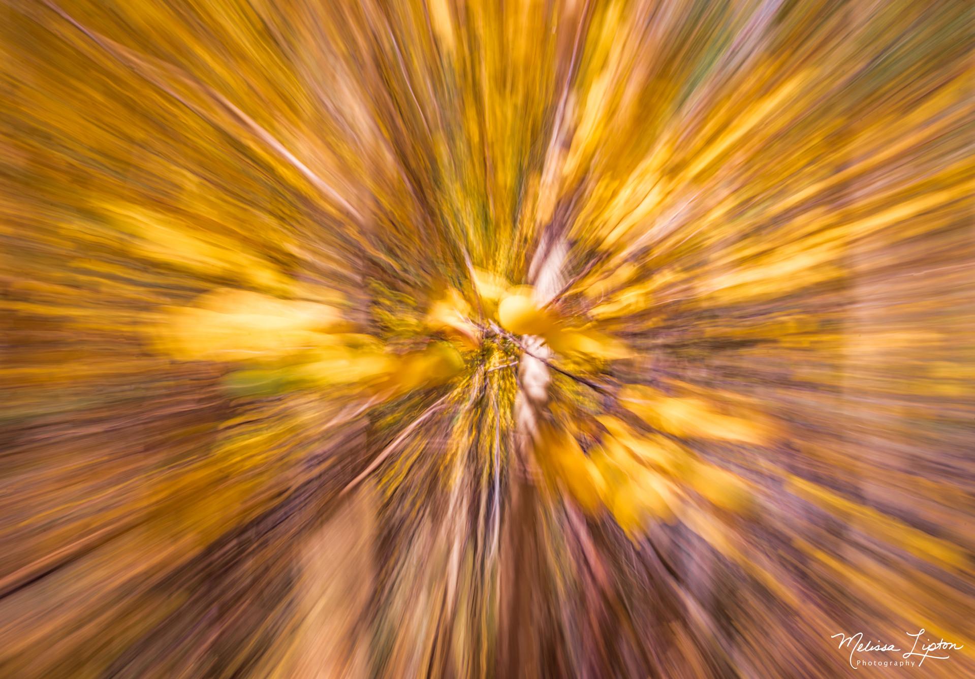 Abstracts / Still Life