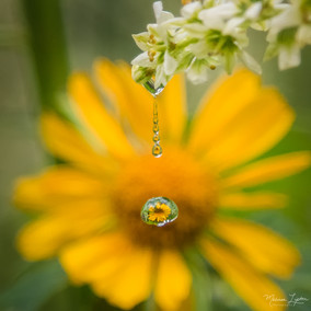 Sunflower Sparkle