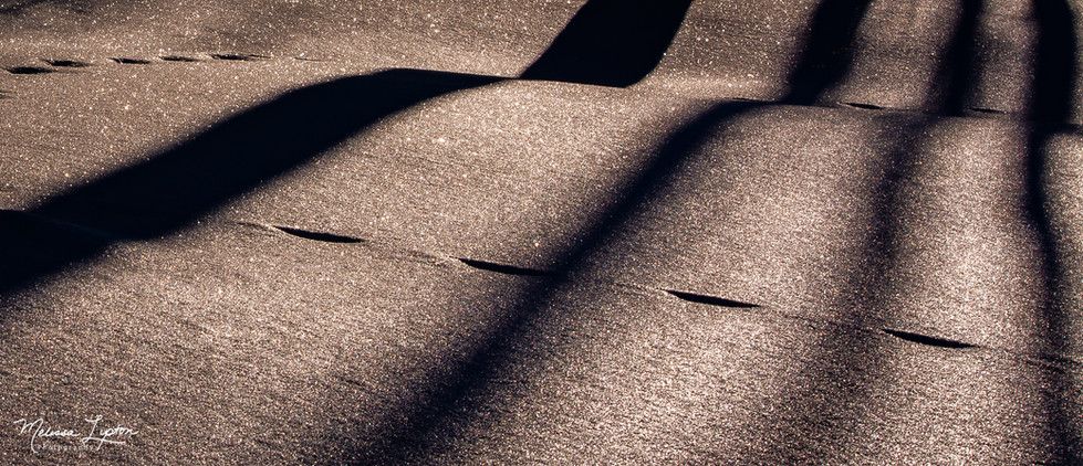 Sepia Shadows