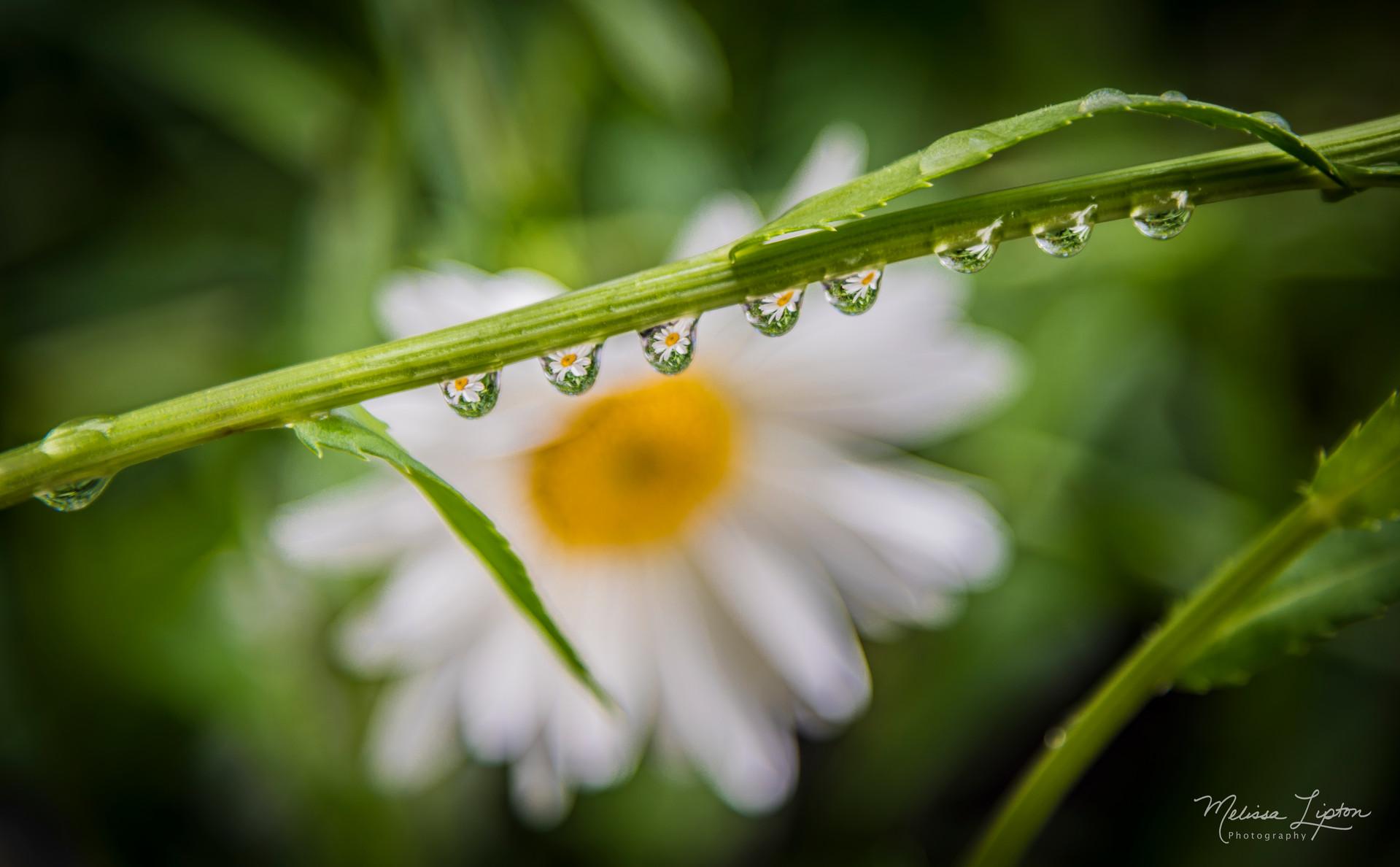 Flora / Plantlife