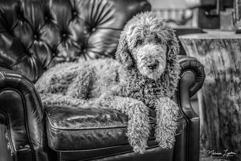 Ruby in Chair