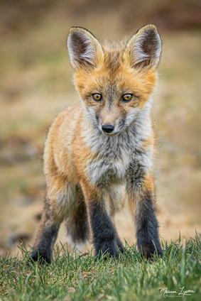 Lookin' Foxy!