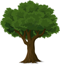 tree-576847_1280.png