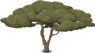 tree-576825_1280.png