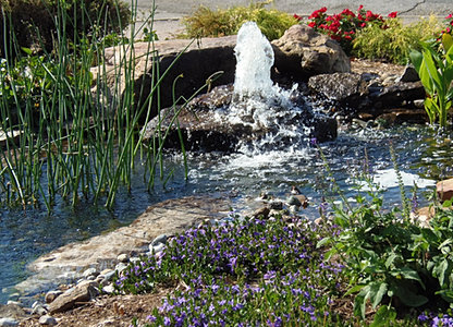 Chalily ponds gardens for Pool converted koi