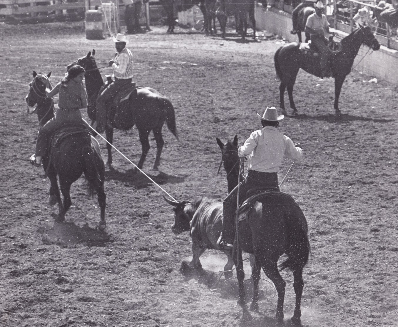 Rodeo roping_edited