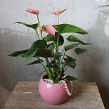 Potplant Photo Crop.jpg