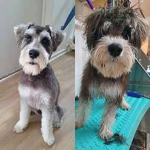 Dog groomer, Grooming