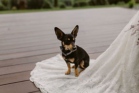 Pet chauffeur to your special occasion