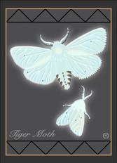 Moths Note Card 2.jpg