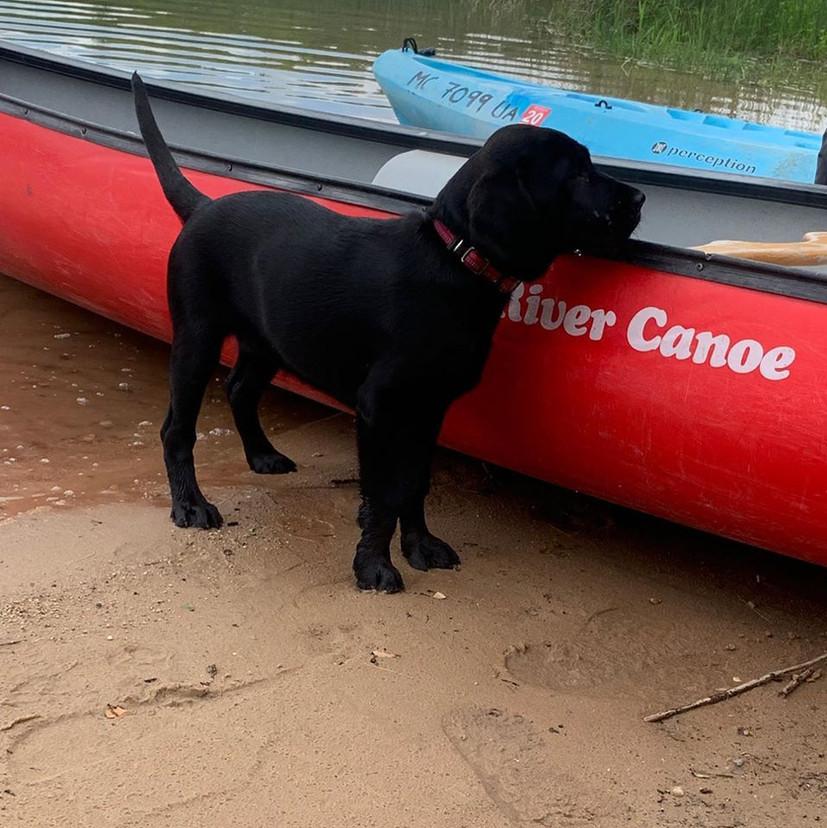 Black Lab Canoe.jpg