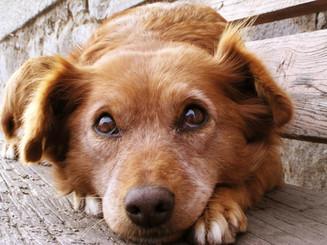 My Dog is Much Happier & Healthier!