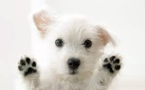 paws-up