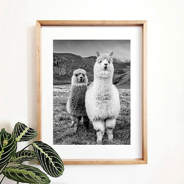 Alpaca Poster Canvas Art Painting