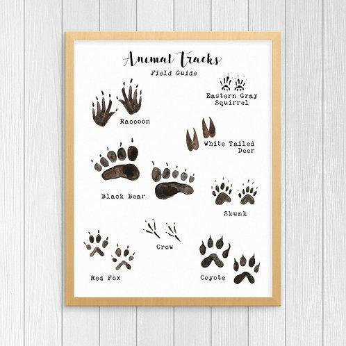 Woodland Animal Tracks Poster