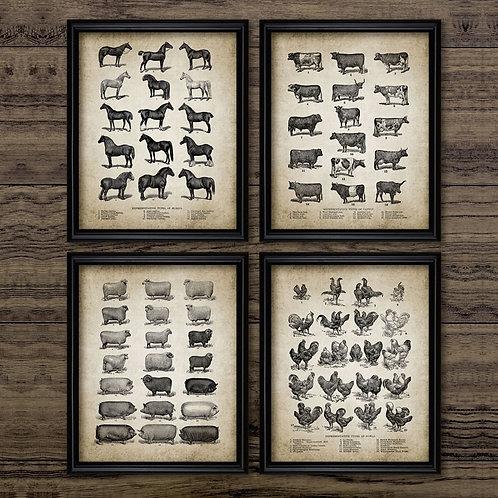 Vintage Farm Animals Posters