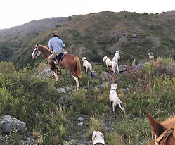 dogo argentino breeders
