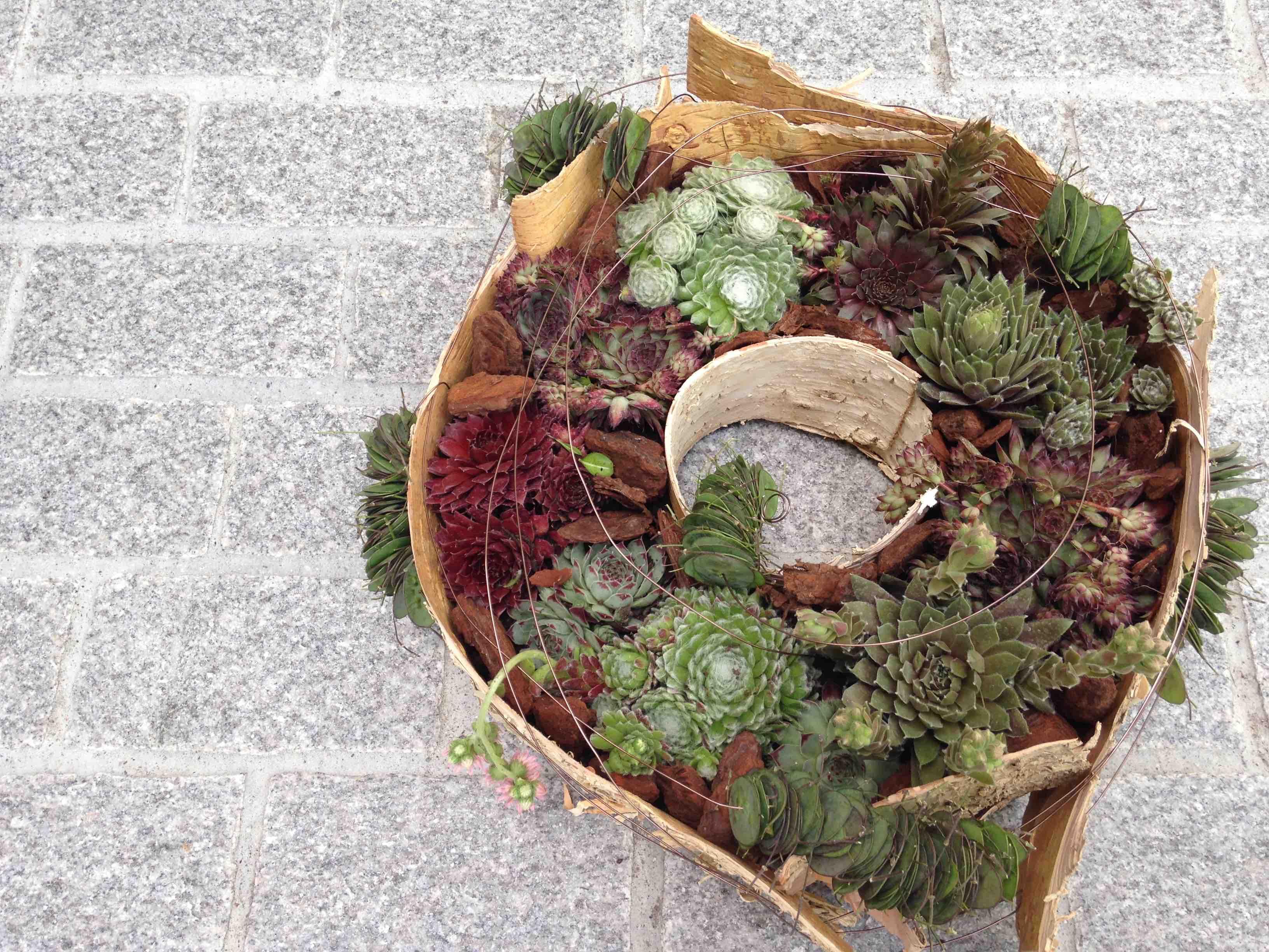 Kranz bepflanzt aus Hauswurz