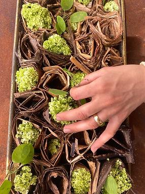 Blumen_Graben_Frauenfeld_5352.JPEG