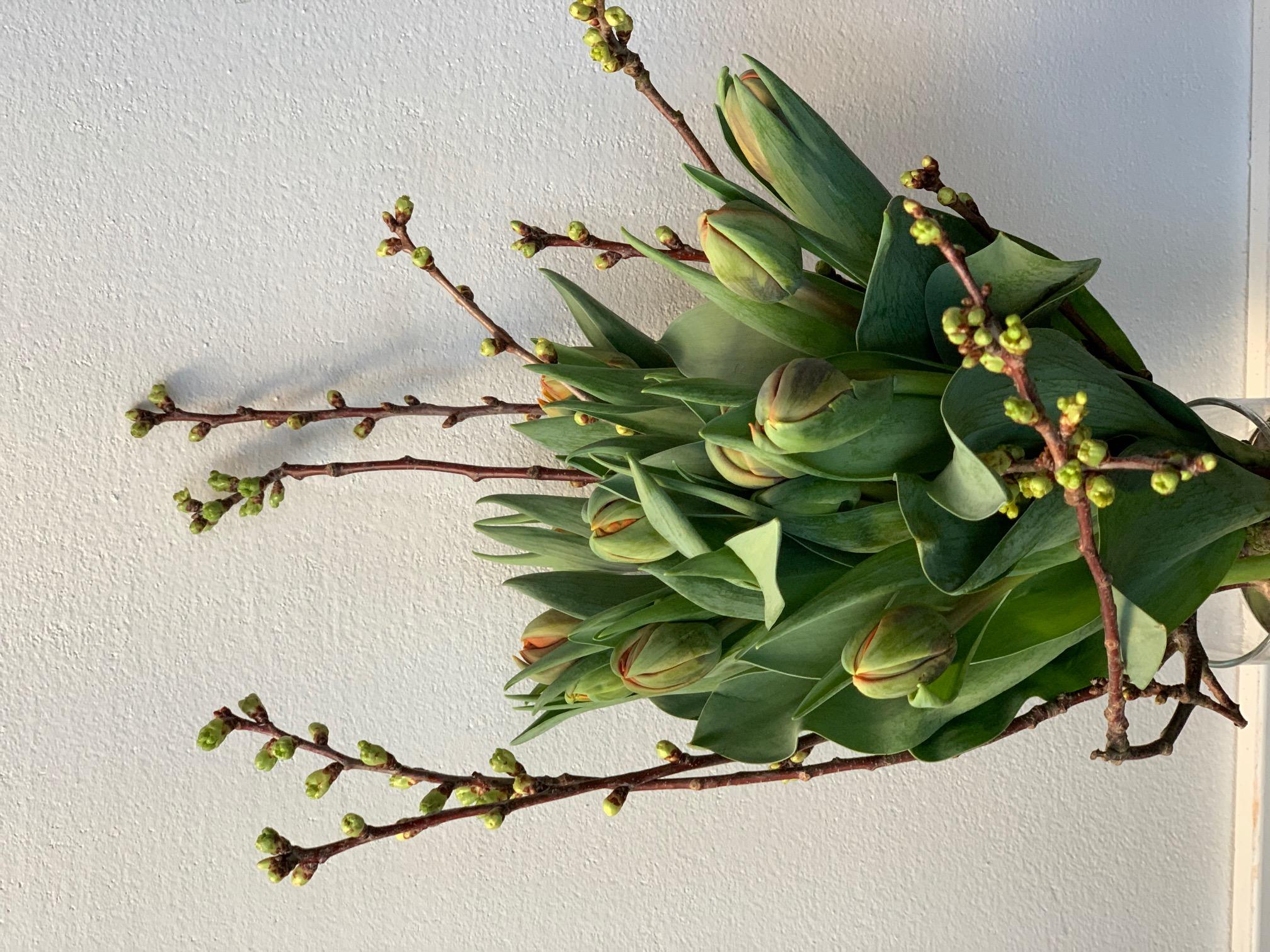 Tulpen kurz