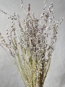 Trockenblumen Briza minima