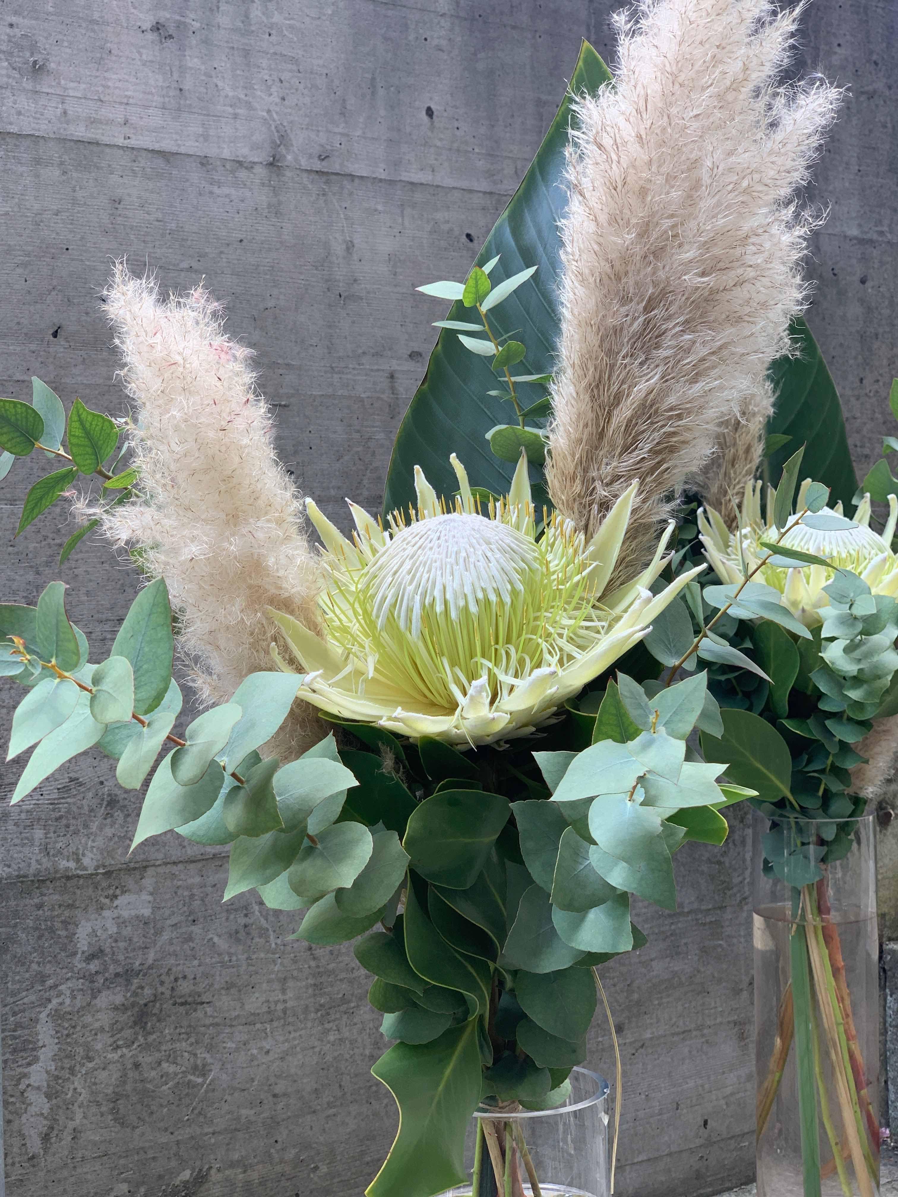 Protea ausgeschmückt