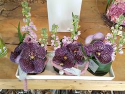Vanda-Blüten