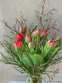 Tulpen rot