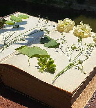 Blumen_Graben_Frauenfeld_5387.JPEG