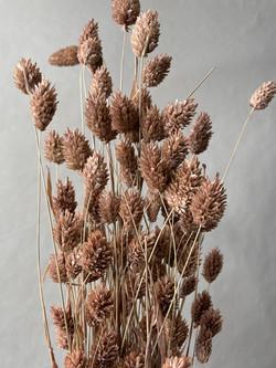 Trockenblumen Phalaris braun