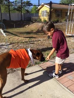 Pasco County Animal Services 2