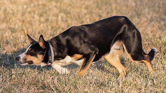 Buy Dog & Handler Sponshorship
