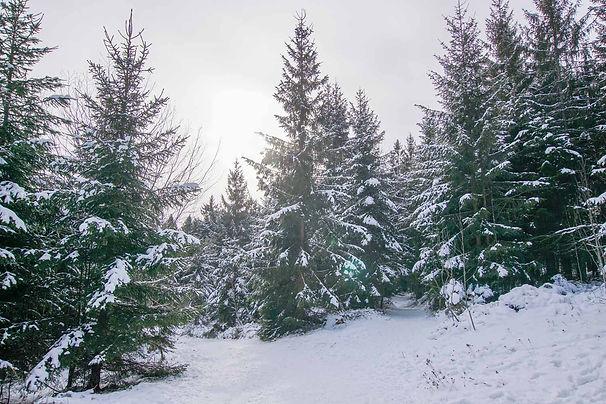 sankt-englmar-winter-wandern.jpg