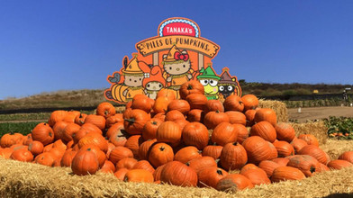 Hello Kitty Tanaka Farms Pumpkin Patch | Irvine, CA