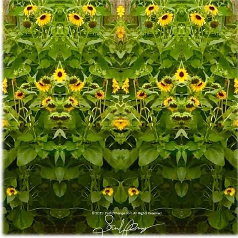 1324 SunflowerPyramid