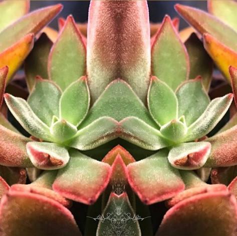 1303 Succulents