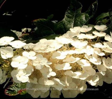 No. 1436 Floralbeauty_sberry.jpg