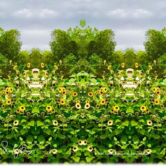 1323 SunflowerWings