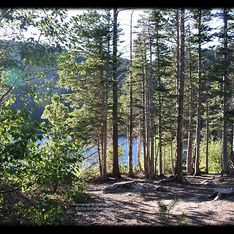 No. 1458 Bear Lake Rocky Mountain National Park