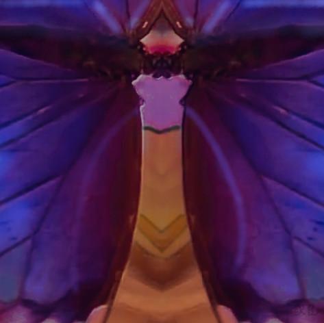 my butterfly 21 SKB.jpg