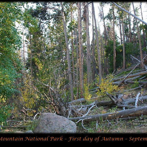 No. 1453 First Day of Autumn in the Rockies 2018