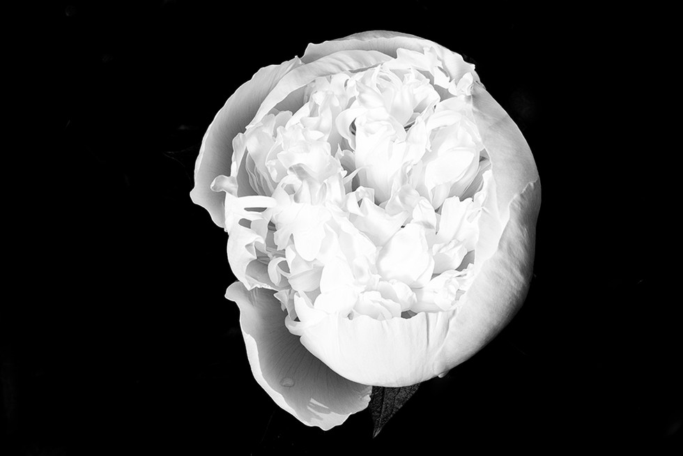 Fleurs de juin, en noir et blanc et en couleurs