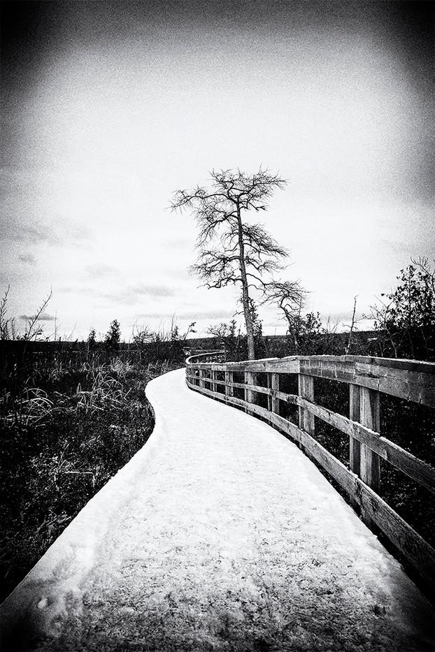 Arbre solitaire, l'hiver