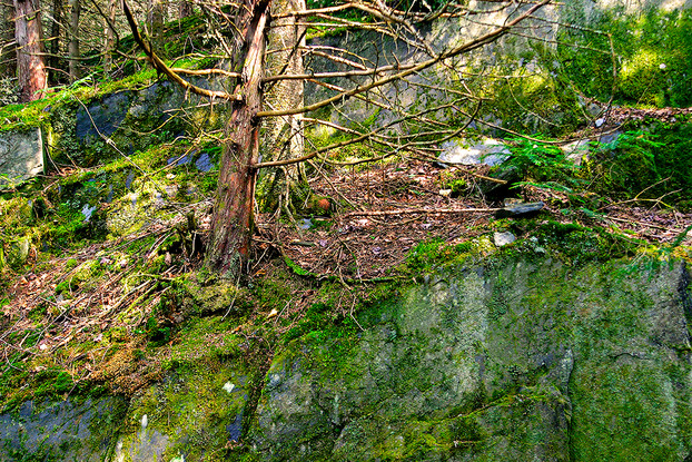 Un arbre du sentier poétique